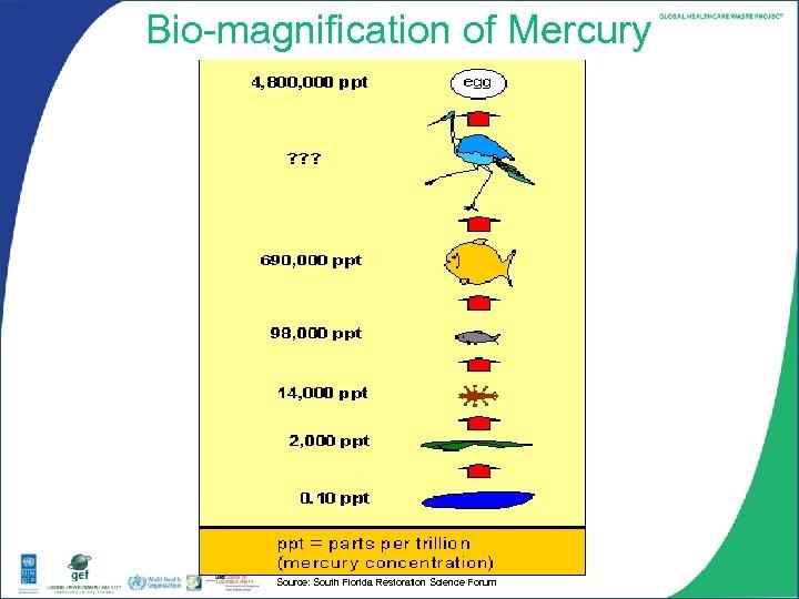 Bio-magnification of Mercury Source: South Florida Restoration Science Forum