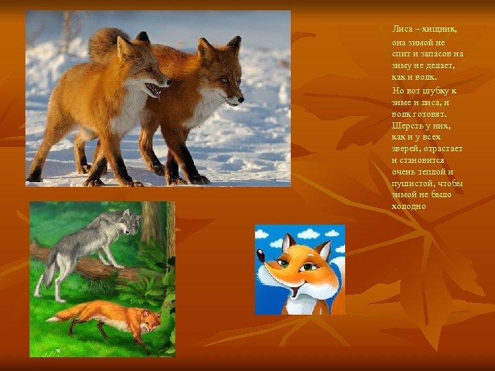 причинами картинки как лиса готовится к зиме это растение, которое