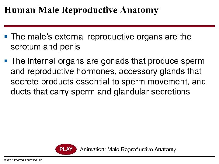 Human Male Reproductive Anatomy § The male's external reproductive organs are the scrotum and