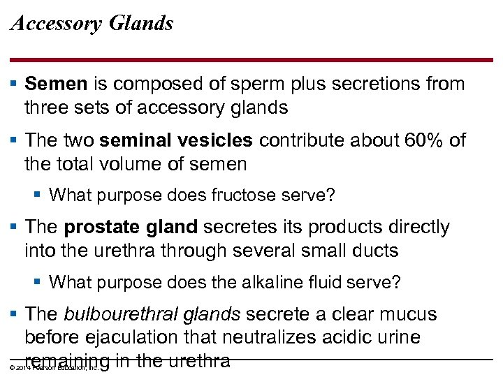 Accessory Glands § Semen is composed of sperm plus secretions from three sets of