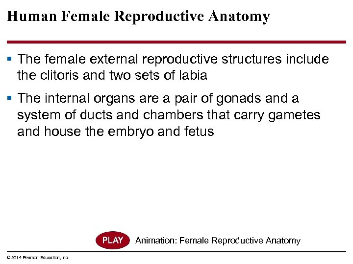 Human Female Reproductive Anatomy § The female external reproductive structures include the clitoris and