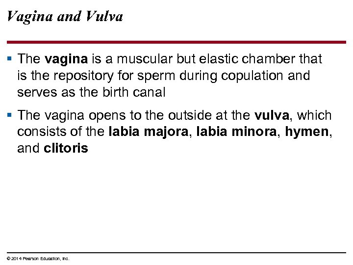 Vagina and Vulva § The vagina is a muscular but elastic chamber that is