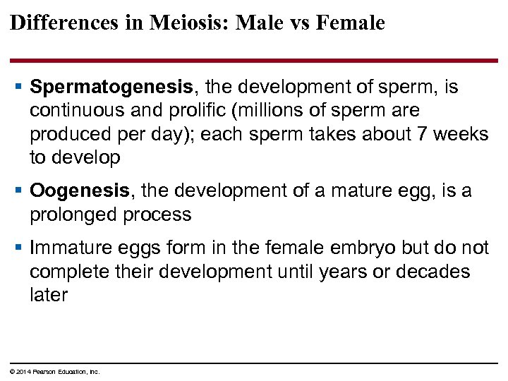 Differences in Meiosis: Male vs Female § Spermatogenesis, the development of sperm, is continuous