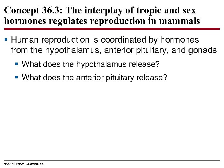 Concept 36. 3: The interplay of tropic and sex hormones regulates reproduction in mammals