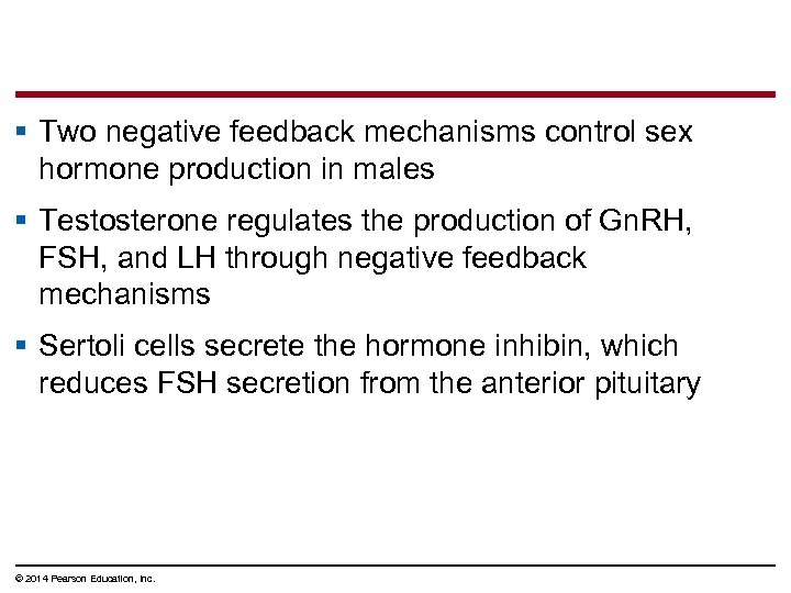 § Two negative feedback mechanisms control sex hormone production in males § Testosterone regulates