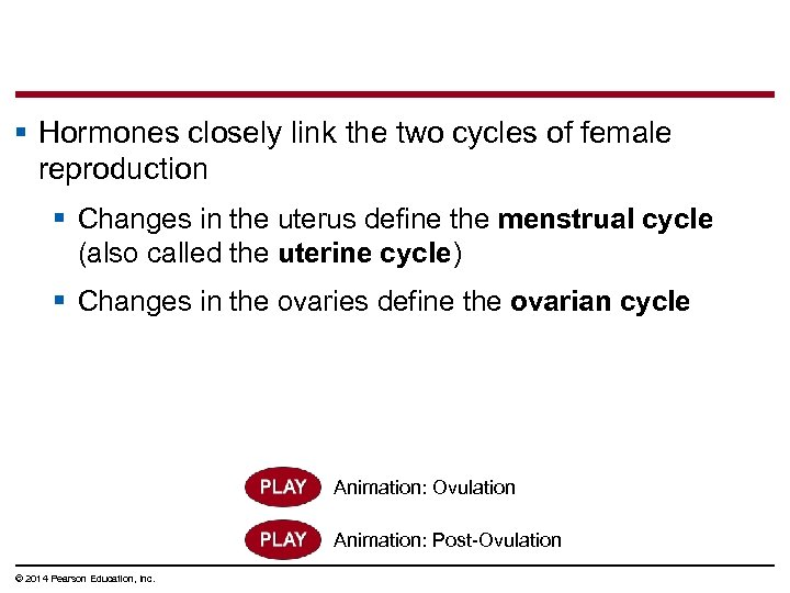 § Hormones closely link the two cycles of female reproduction § Changes in the