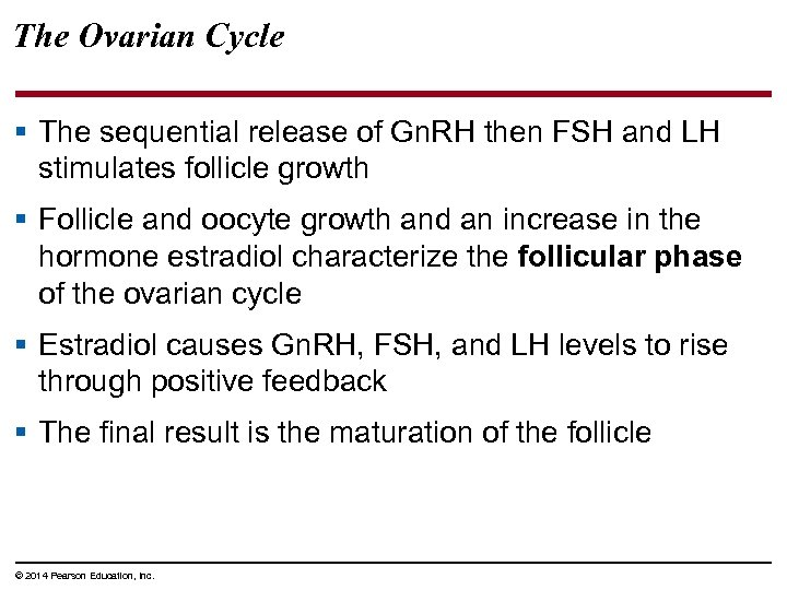 The Ovarian Cycle § The sequential release of Gn. RH then FSH and LH