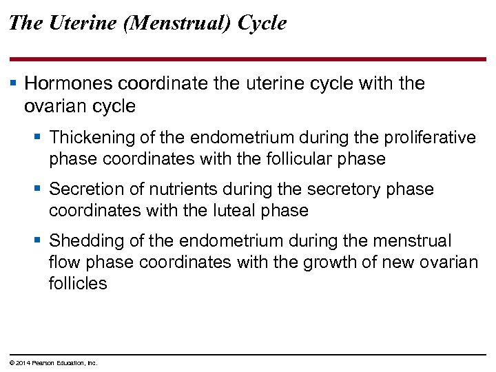 The Uterine (Menstrual) Cycle § Hormones coordinate the uterine cycle with the ovarian cycle