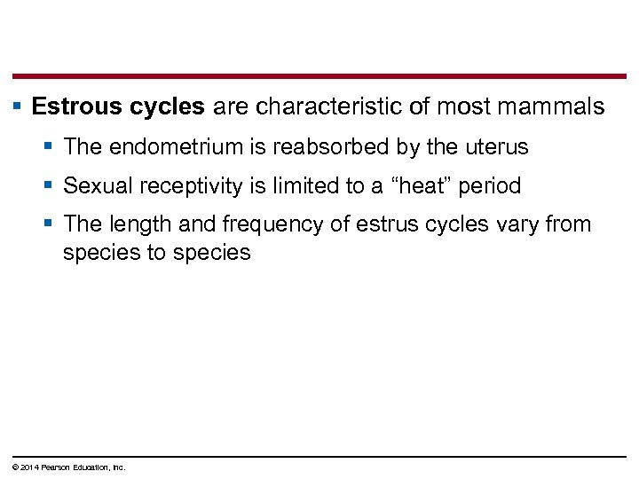 § Estrous cycles are characteristic of most mammals § The endometrium is reabsorbed by