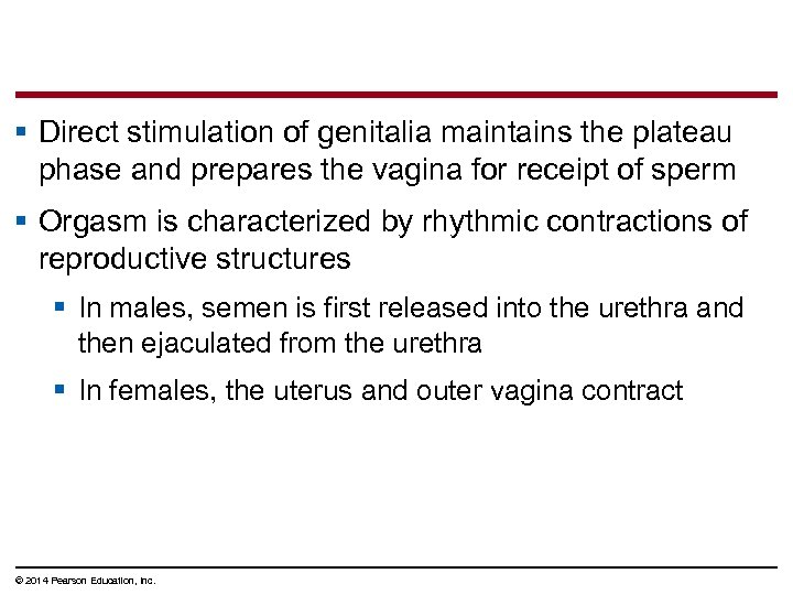 § Direct stimulation of genitalia maintains the plateau phase and prepares the vagina for
