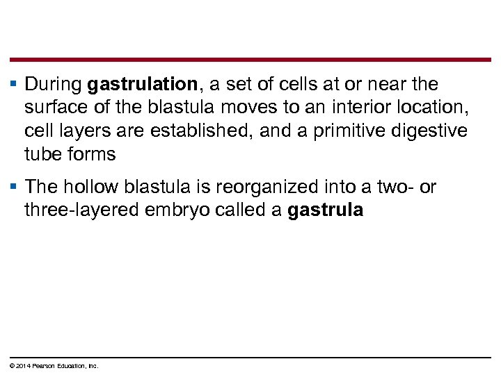 § During gastrulation, a set of cells at or near the surface of the