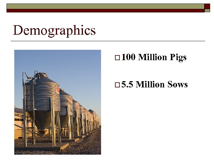 Demographics o 100 o 5. 5 Million Pigs Million Sows