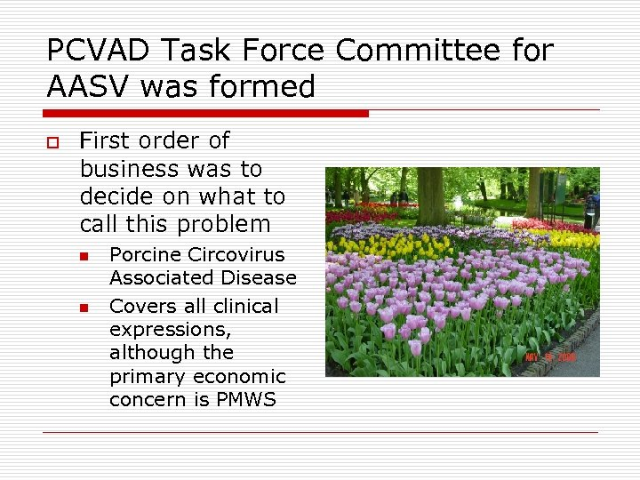 PCVAD Task Force Committee for AASV was formed o First order of business was