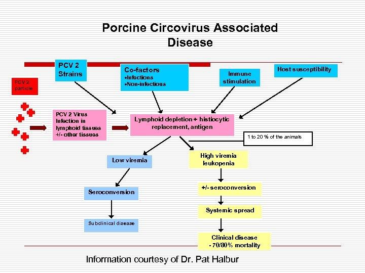 Porcine Circovirus Associated Disease PCV 2 Strains Co-factors ·Infections ·Non-infectious PCV 2 particle PCV