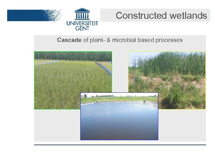 Constructed wetlands Cascade of plant- & microbial based processes
