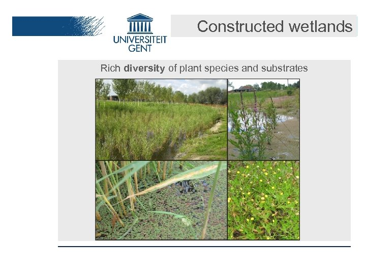 Constructed wetlands Rich diversity of plant species and substrates