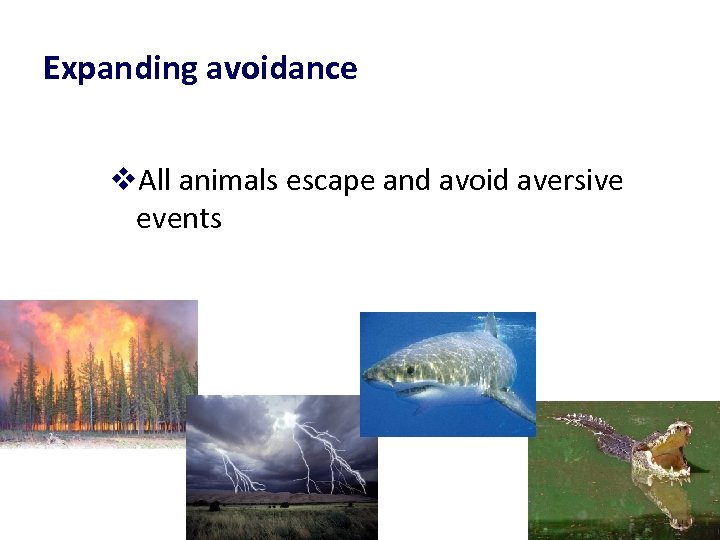 Expanding avoidance v. All animals escape and avoid aversive events