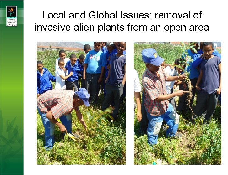 Local and Global Issues: removal of invasive alien plants from an open area