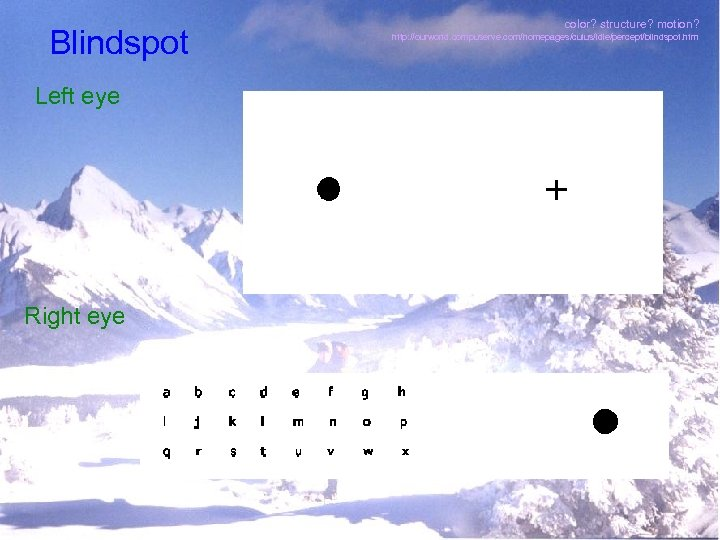Blindspot Left eye Right eye color? structure? motion? http: //ourworld. compuserve. com/homepages/cuius/idle/percept/blindspot. htm