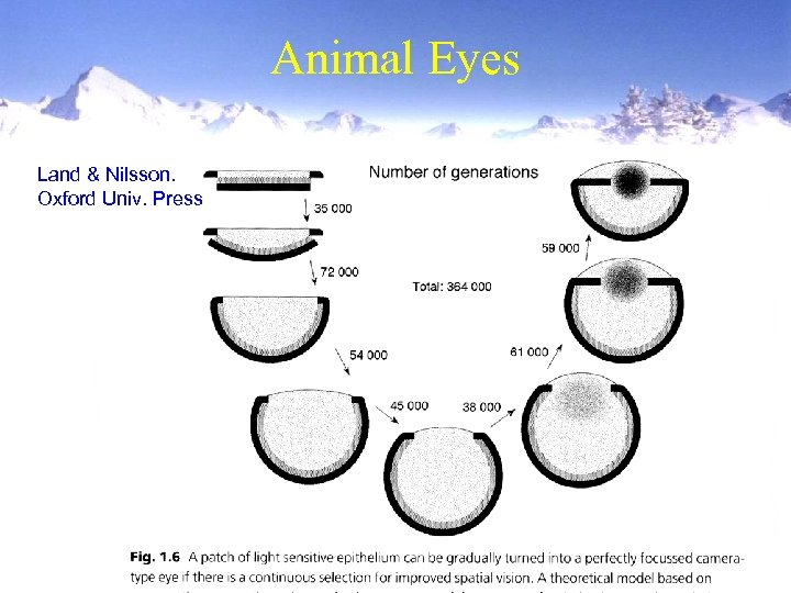 Animal Eyes Land & Nilsson. Oxford Univ. Press