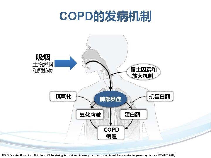 COPD的发病机制 吸烟 生物燃料 和颗粒物 宿主因素和 放大机制 抗氧化 抗蛋白酶 肺部炎症 蛋白酶 氧化应激 COPD 病理 GOLD
