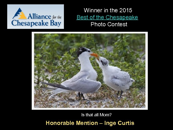 Winner in the 2015 Best of the Chesapeake Photo Contest Is that all Mom?