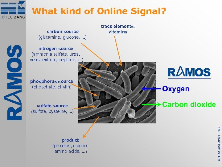 What kind of Online Signal? carbon source (glutamine, glucose, . . . ) trace