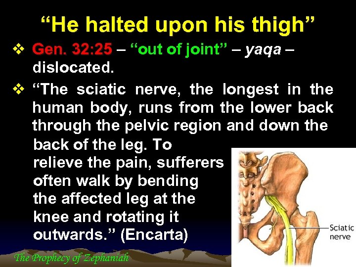 """""""He halted upon his thigh"""" v Gen. 32: 25 – """"out of joint"""" –"""
