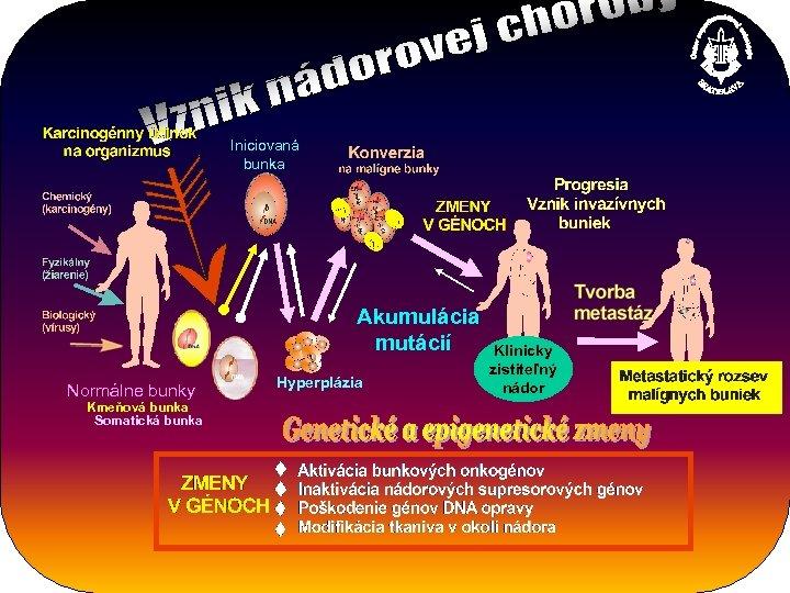 Iniciovaná bunka Akumulácia mutácií Normálne bunky Kmeňová bunka Somatická bunka Hyperplázia Klinicky zistiteľný nádor