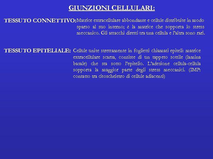 GIUNZIONI CELLULARI: TESSUTO CONNETTIVO: Matrice extracellulare abbondante e cellule distribuite in modo sparso al