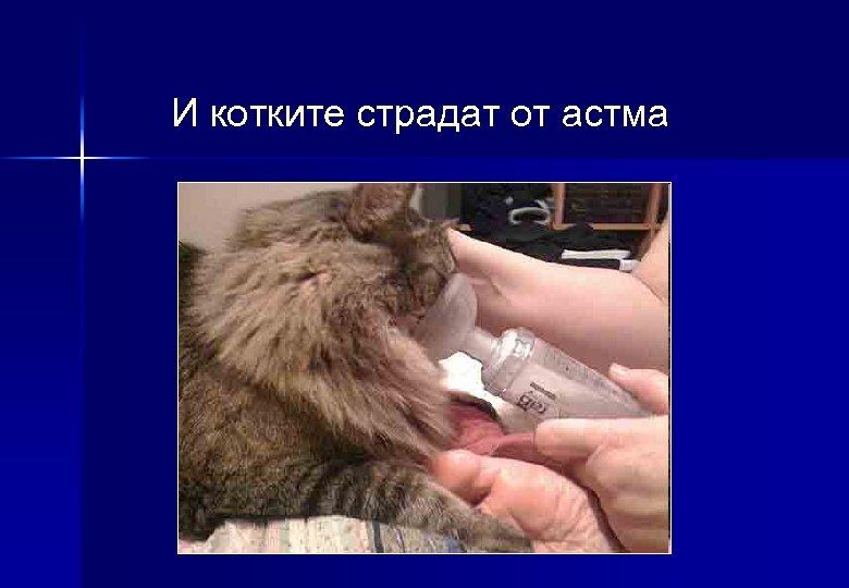 И котките страдат от астма