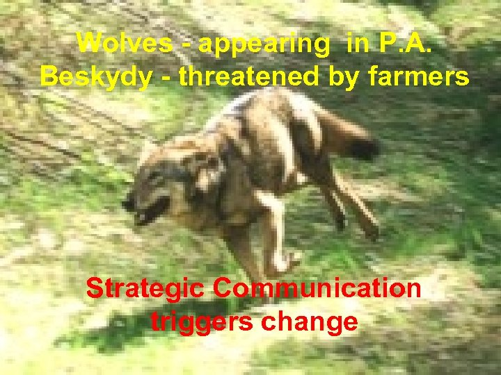 Wolves - appearing in P. A. Beskydy - threatened by farmers Strategic Communication triggers