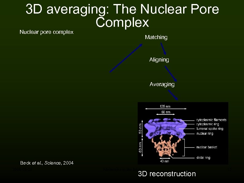 3 D averaging: The Nuclear Pore Complex Nuclear pore complex Matching Aligning Averaging Beck