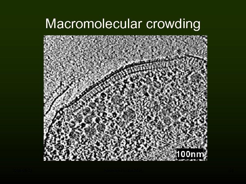 Macromolecular crowding 2008 -05 -28 Molecules in the Mist 16