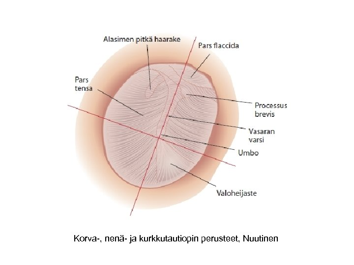 Korva-, nenä- ja kurkkutautiopin perusteet, Nuutinen