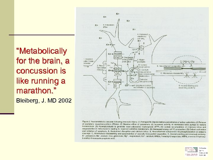 """""""Metabolically for the brain, a concussion is like running a marathon. """" Bleiberg, J."""