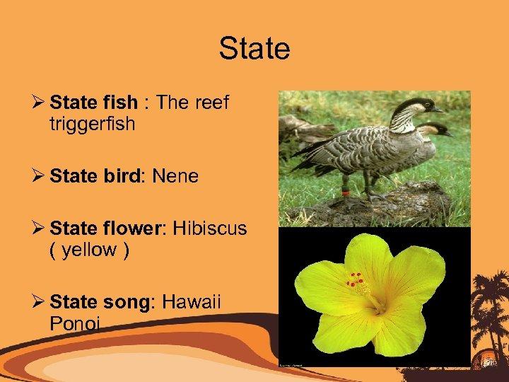 State Ø State fish : The reef triggerfish Ø State bird: Nene Ø State
