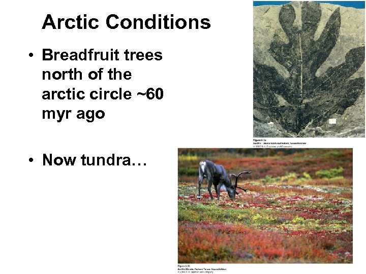 Arctic Conditions • Breadfruit trees north of the arctic circle ~60 myr ago •