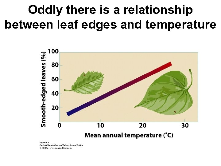 Oddly there is a relationship between leaf edges and temperature