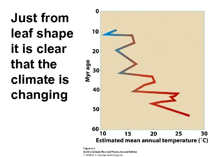 Just from leaf shape it is clear that the climate is changing