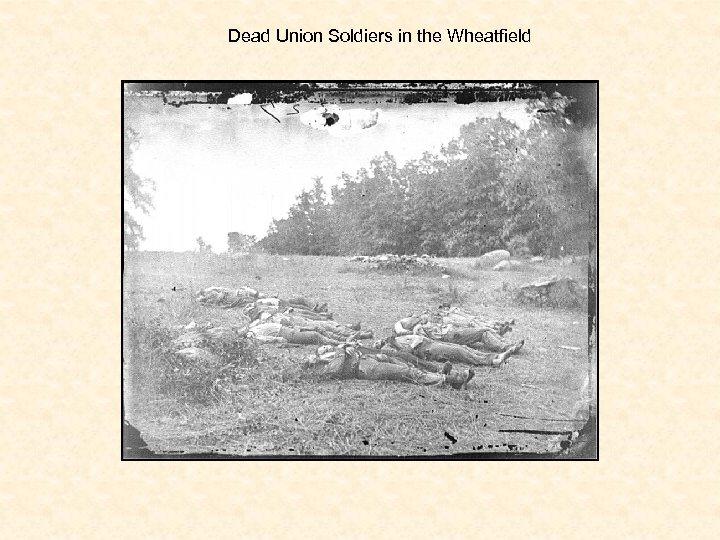 Dead Union Soldiers in the Wheatfield