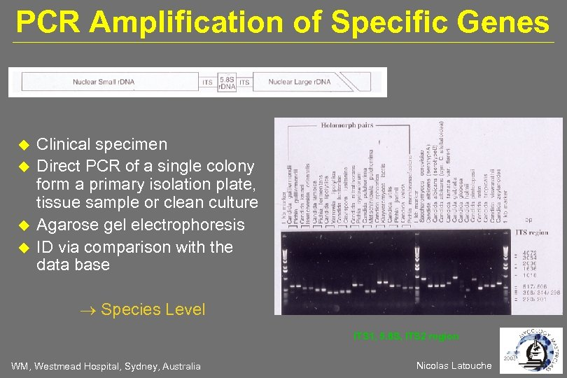 PCR Amplification of Specific Genes Clinical specimen Direct PCR of a single colony form