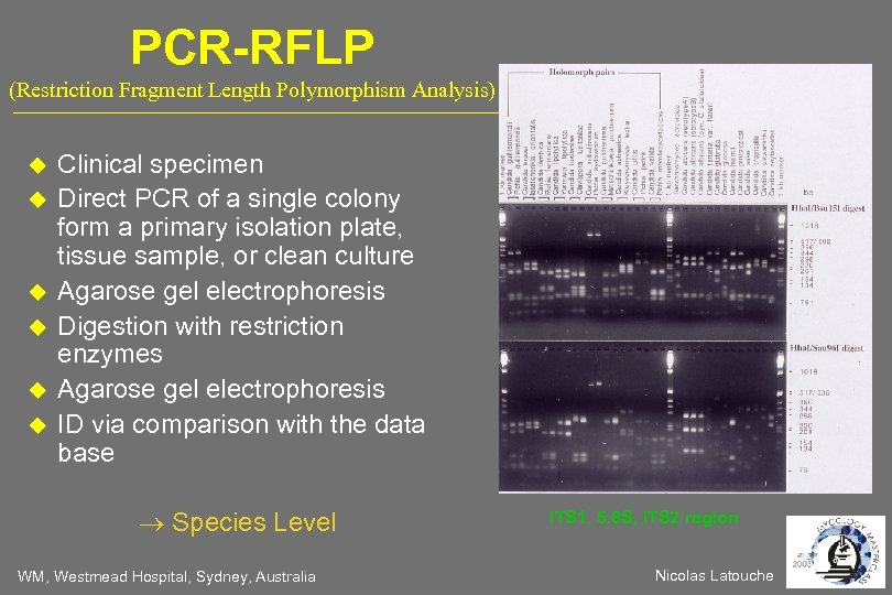 PCR-RFLP (Restriction Fragment Length Polymorphism Analysis) Clinical specimen Direct PCR of a single colony