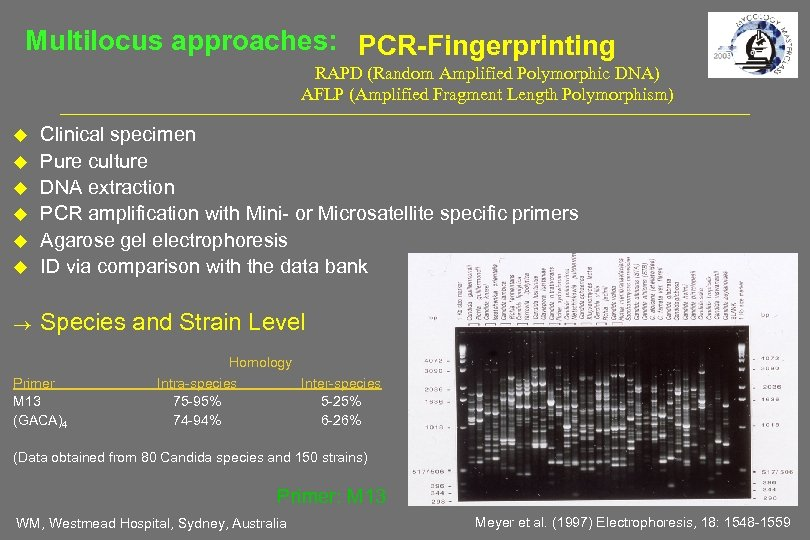 Multilocus approaches: PCR-Fingerprinting RAPD (Random Amplified Polymorphic DNA) AFLP (Amplified Fragment Length Polymorphism) Clinical