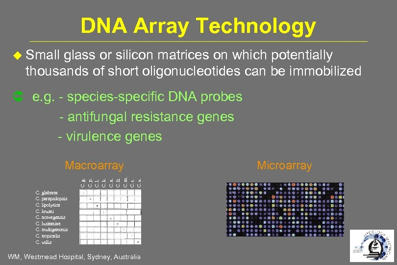 DNA Array Technology Small glass or silicon matrices on which potentially thousands of short