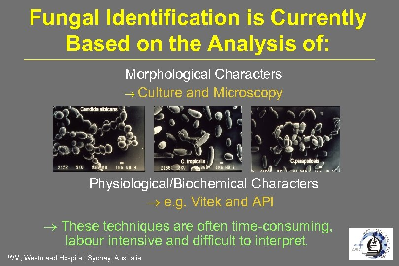 Fungal Identification is Currently Based on the Analysis of: Morphological Characters Culture and Microscopy