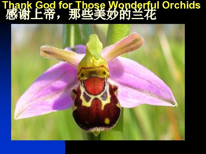 Thank God for Those Wonderful Orchids 感谢上帝,那些美妙的兰花