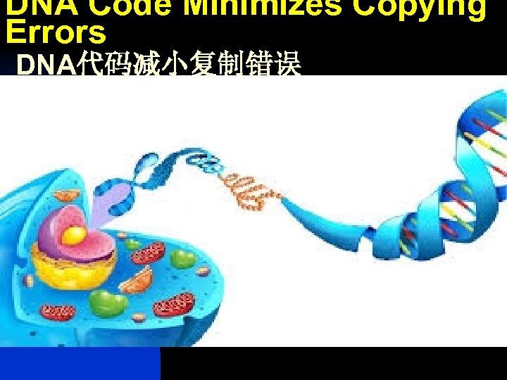 DNA Code Minimizes Copying Errors DNA代码减小复制错误