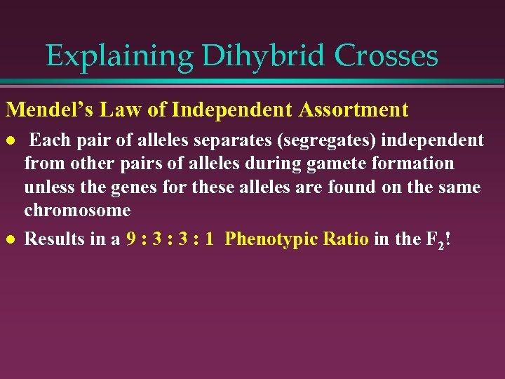 Explaining Dihybrid Crosses Mendel's Law of Independent Assortment l l Each pair of alleles
