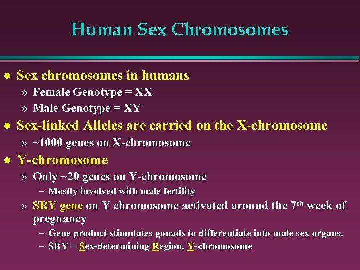 Human Sex Chromosomes l Sex chromosomes in humans » Female Genotype = XX »